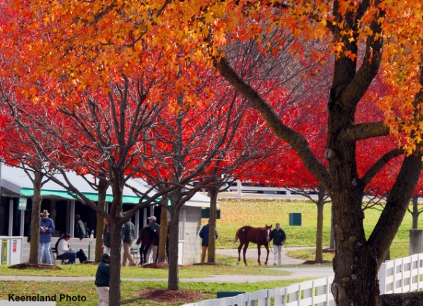 Scenics, 2011 Keeneland November Sale