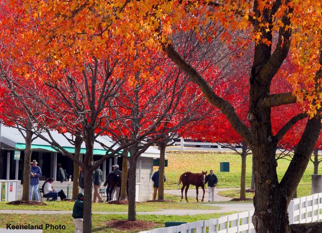 Scenics, 2011 Keeneland November Sale