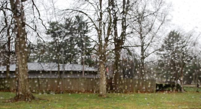 Rainy Day 3/9/16