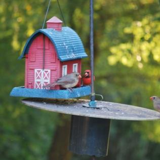 resident cardinal couple